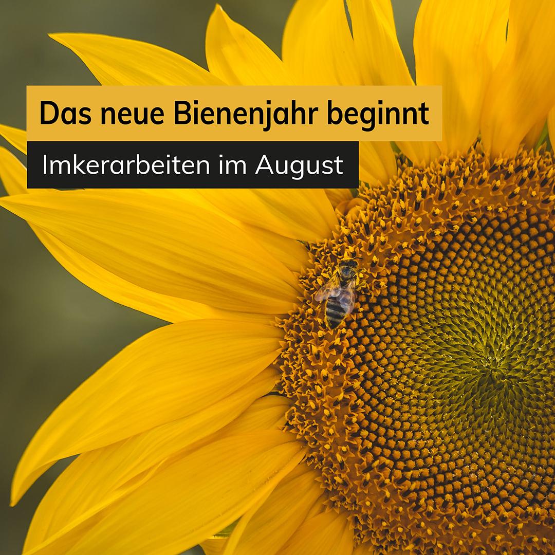 Das neue Bienenjahr beginnt Imkerarbeiten im August