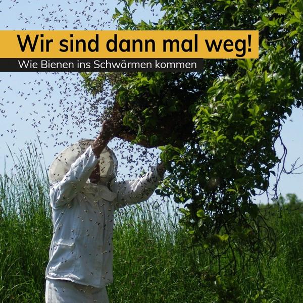 Blog_Schwarmzeit-01