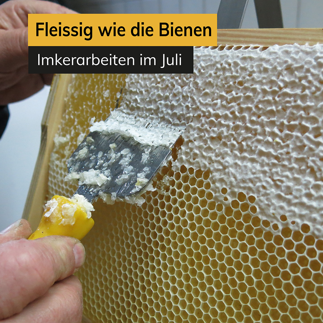 Fleißig wie die Bienen - Imkerarbeiten im Juli