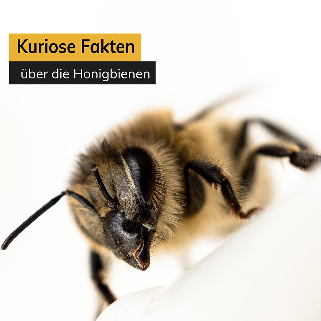 Weltbienentag - Kuriose Fakten über die Bienen