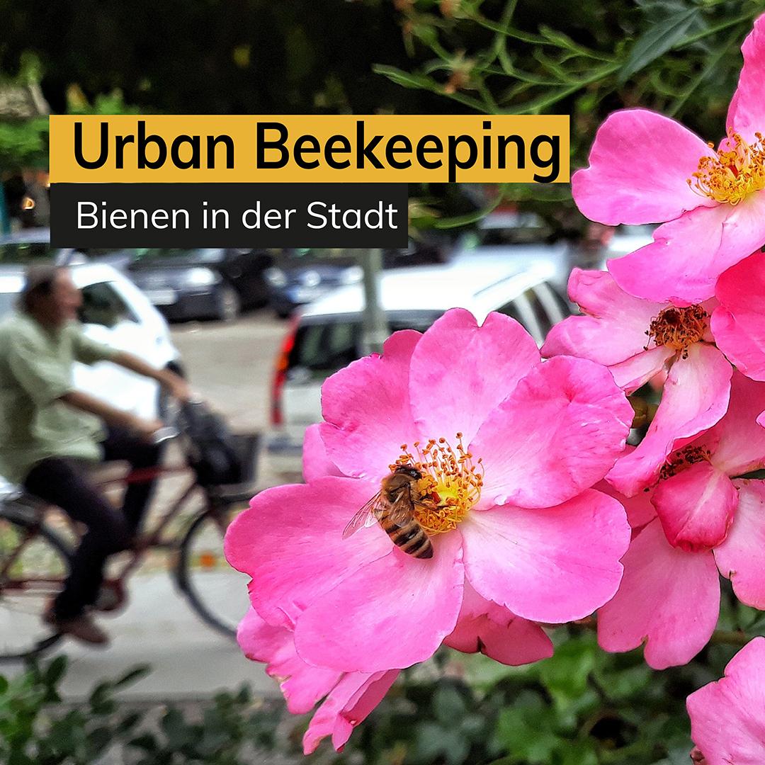 Urban Beekeeping Honigbienen in der Stadt